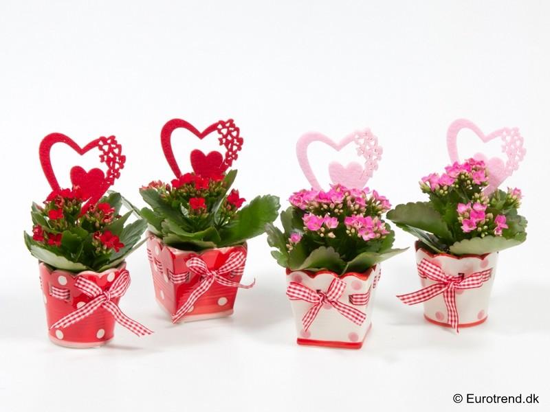 Купить цветы и подарки   sendflowersru